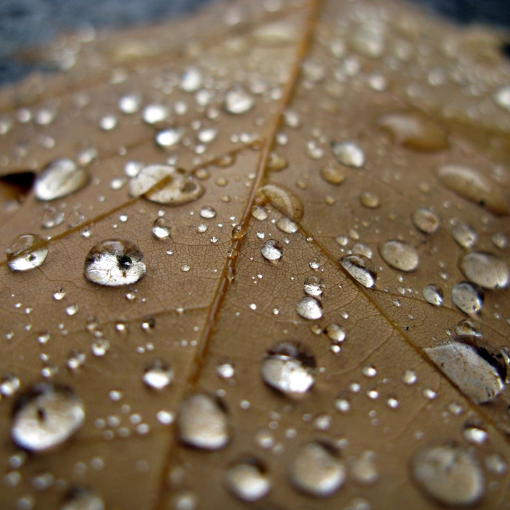 Leaf Water Droplet