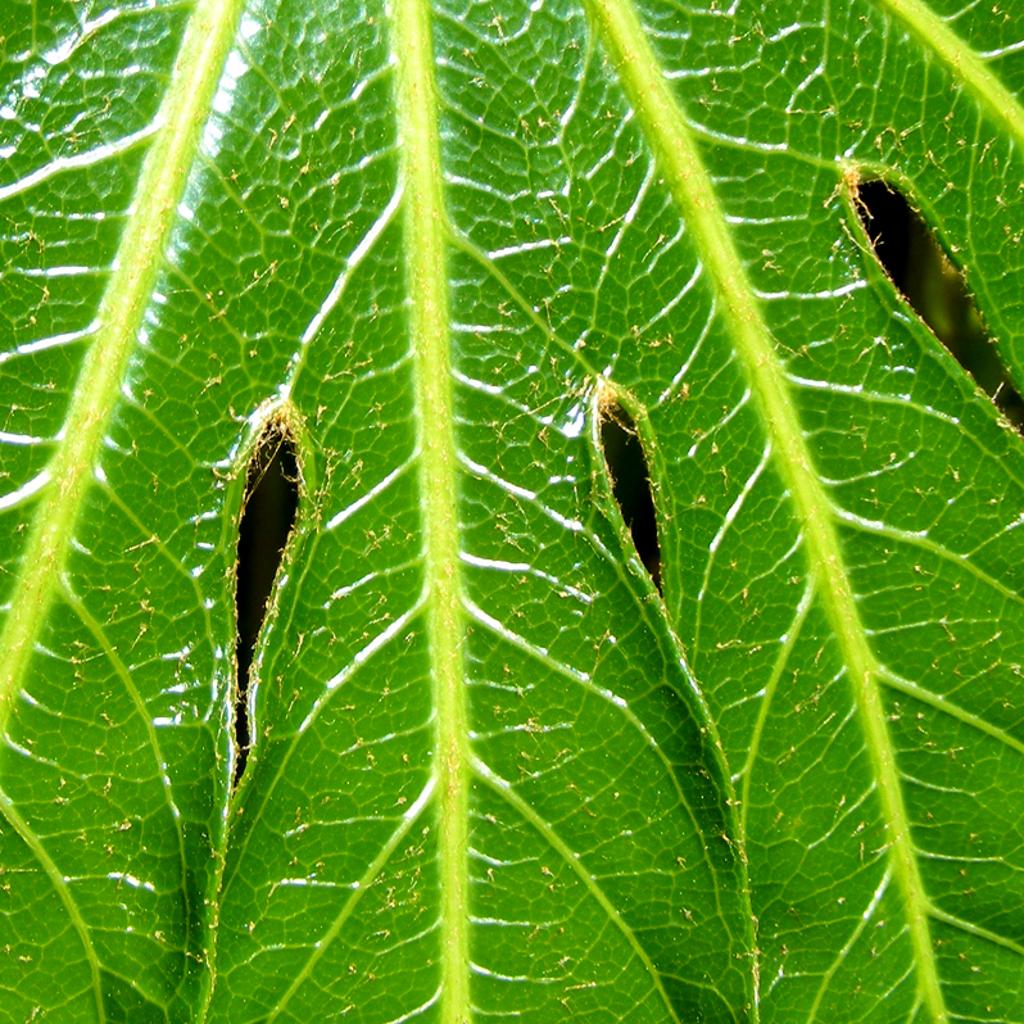 Green Leaf iPad Wallpaper