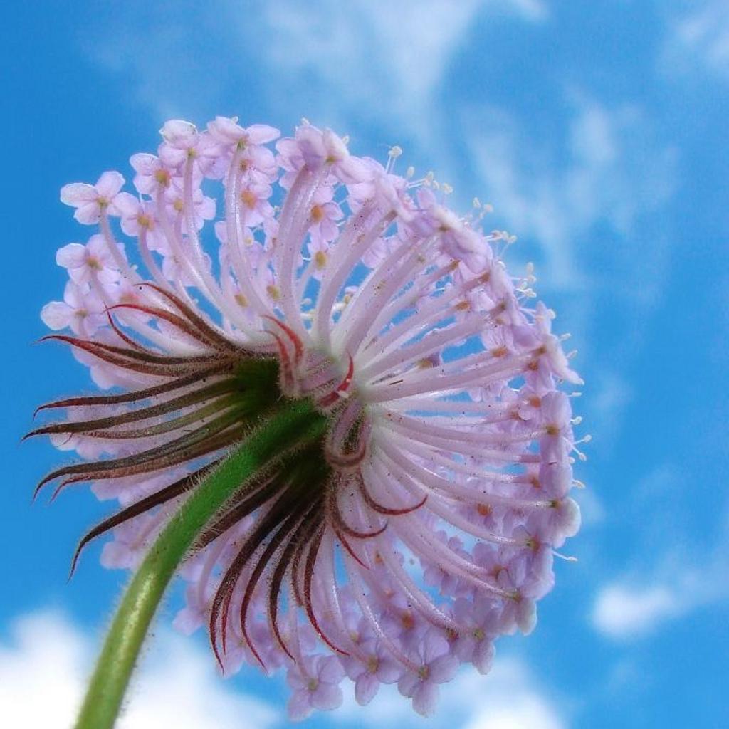 Purple flower and blue sky ipad background eliot s pothole on the